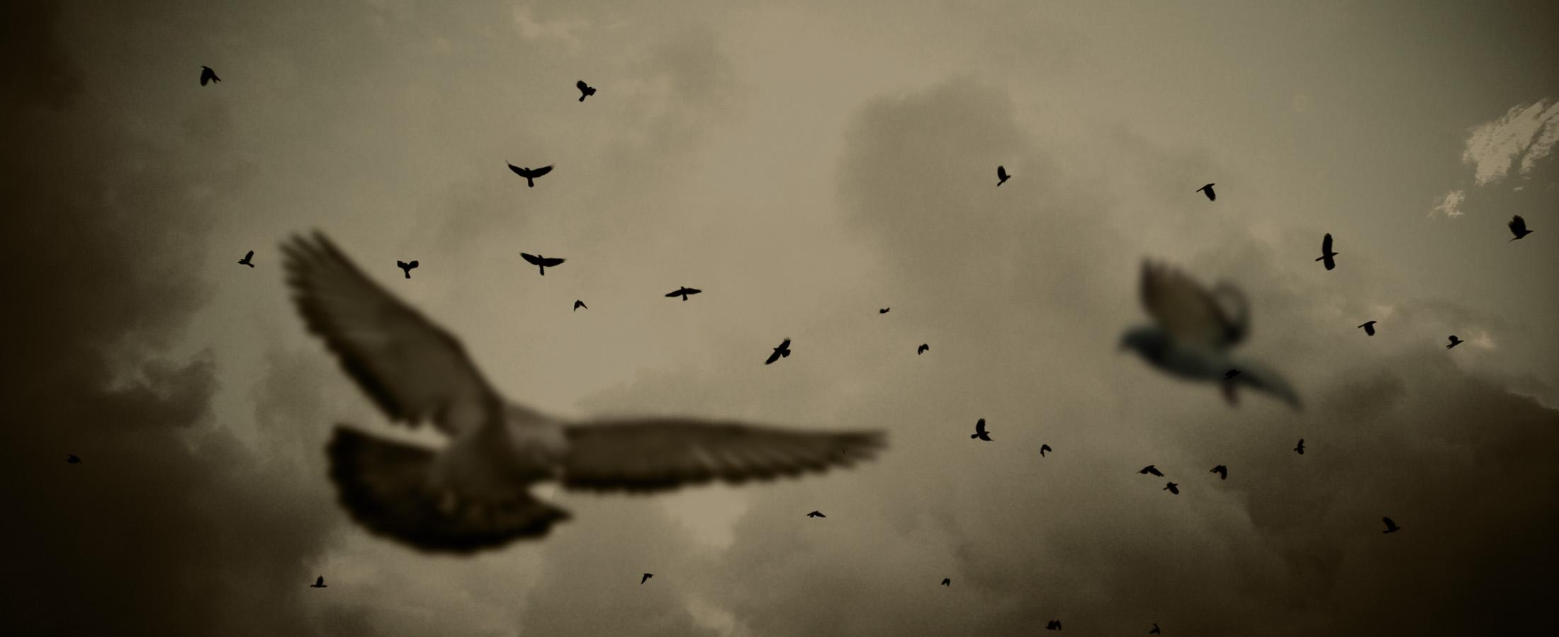 CH-pigeons